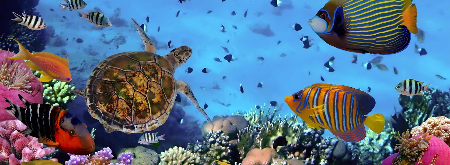 Australia & Fiji Itineraries