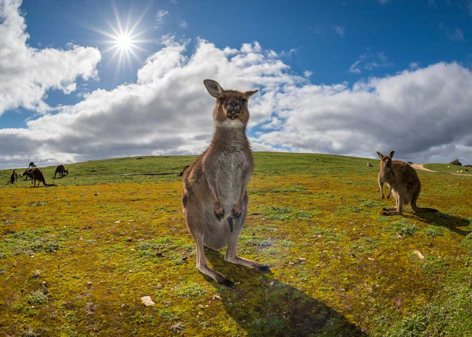 Sunset on Kangaroo Island
